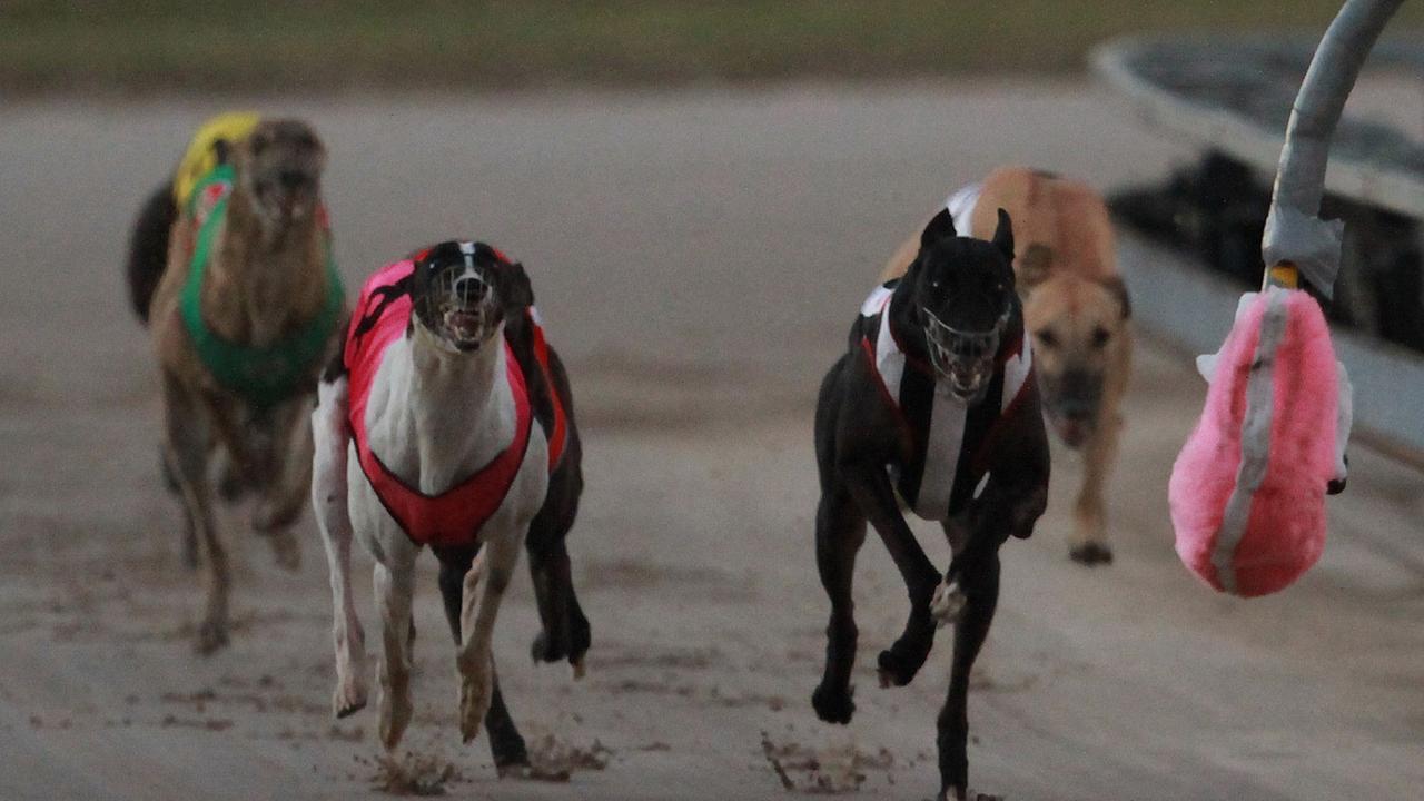 Greyhound racing at Ipswich