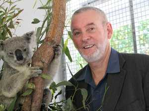 Vaccine roll out to help save Coast's koalas
