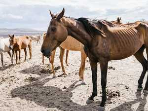 'Reckless' owner fined after horses starve to death