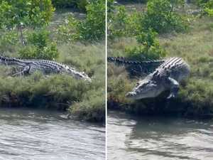 'No fear': Massive croc spotted at popular river