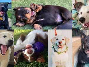 Winner: Central Highlands' cutest dog has been revealed