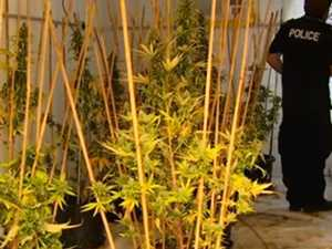 Four people charged over alleged Noosaville pot production