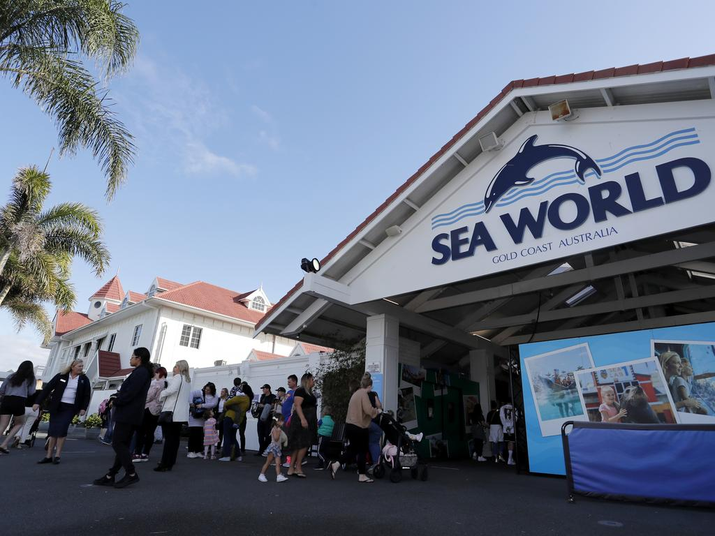 Sea World theme park has been contacted for comment over the plush penguin that is being blamed for critically injuring Deklan Babington-MacDonald. Picture: Regi Varghese