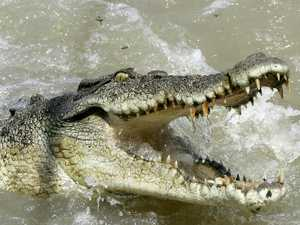 Huge croc launches into boat and attacks fishermen