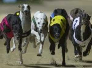 Greyhound fields for Friday's Rockhampton Cup meeting