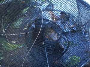 Platypus killed at popular Broken River viewing spot