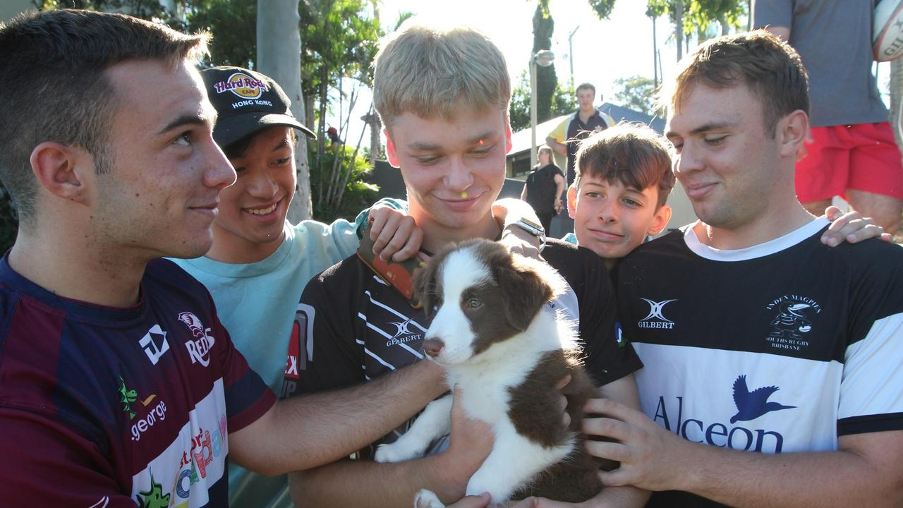 Broxy the Border Collie puppy is Ipswich Grammar School's new boarding dog.