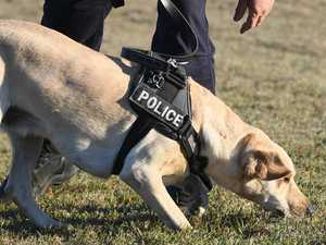 Hero police dog tracks four alleged burglars hiding in grass