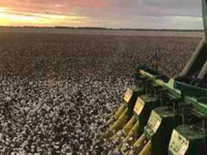 CQ cotton farmers to reap rewards of AI pesticide technology