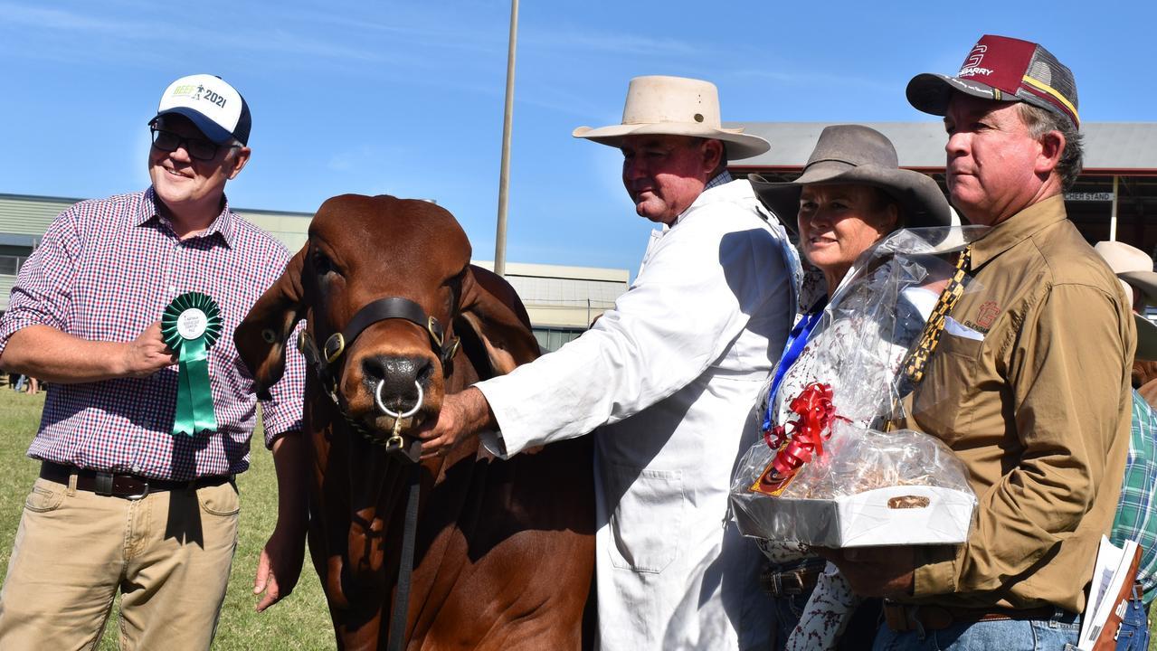 Prime Minister Scott Morrison with Brett Nobbs and Anna McCamley, awarding the calf champion Brahman bull.