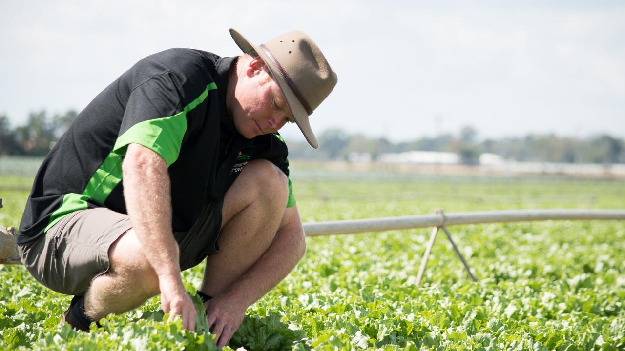 Lockyer Valley Growers Association president Michael Sippel. PHOTO: Ali Kuchel