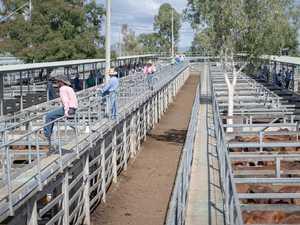 Beef Week draws large crowd to weekly cattle sale