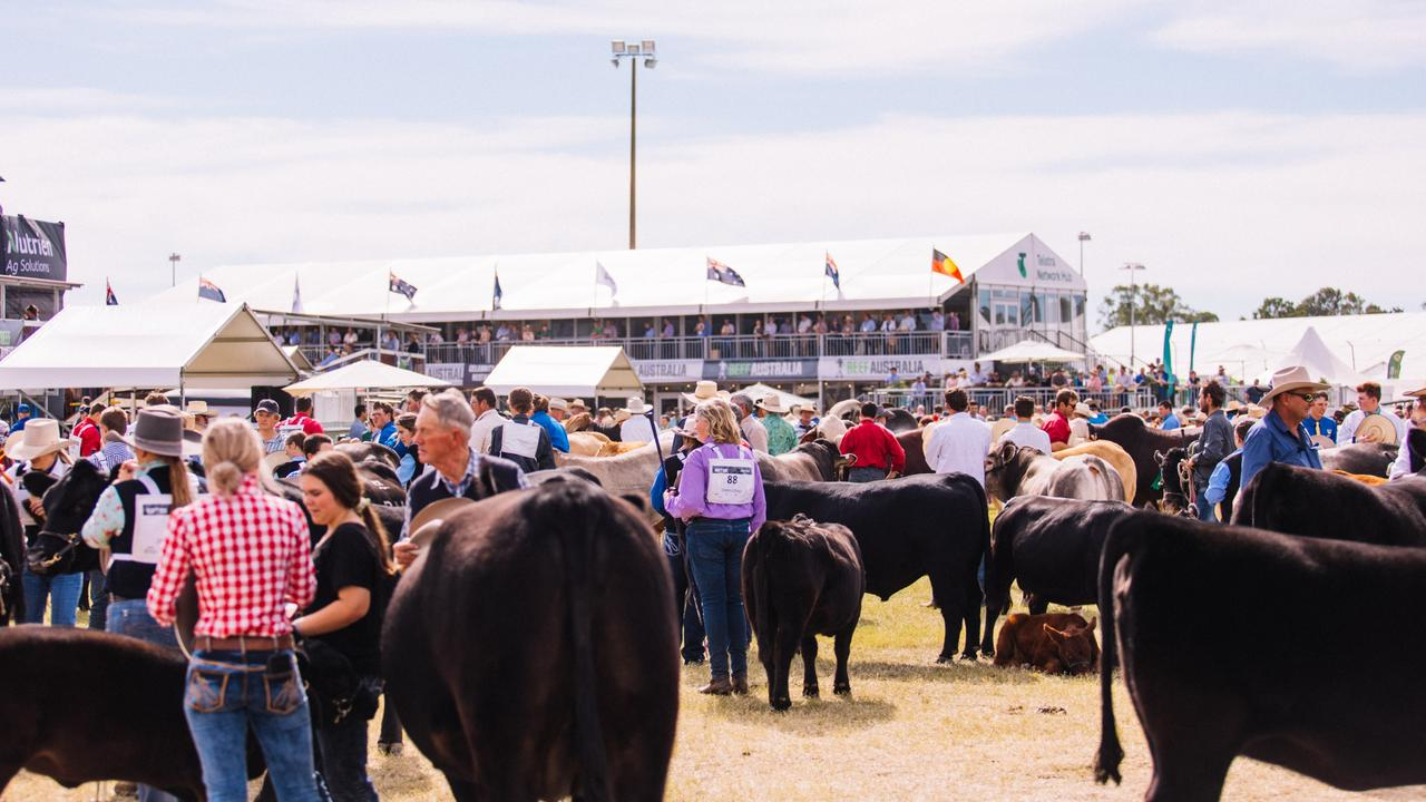 A stud cattle parade at Beef Australia 2021.