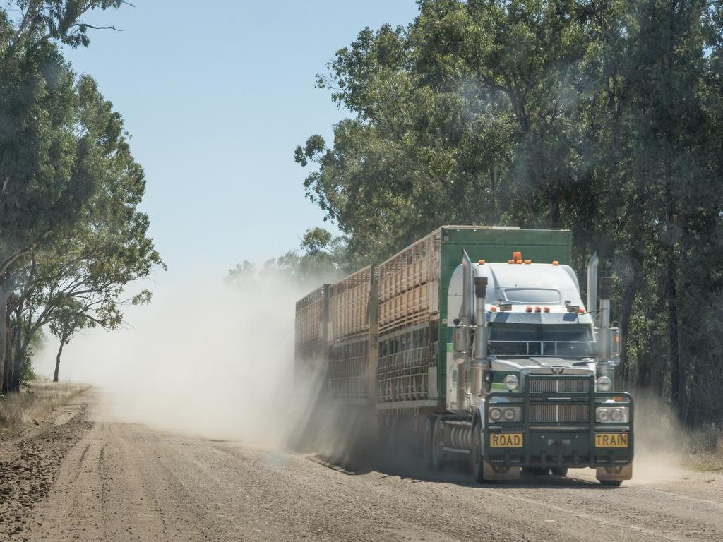 A road train carrying cattle. Photo: File