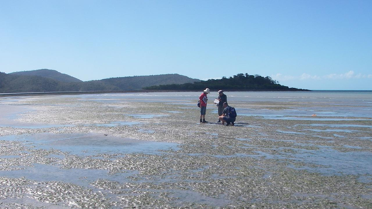 Whitsunday Seagrass Watch volunteers conducting monitoring off Cannonvale Beach.