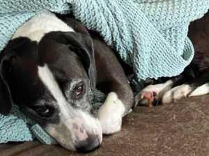 Dog owner's harrowing warning after pooch dies