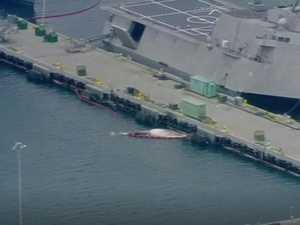 Dead whales found under navy ship