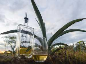 Bowen agave farm taps into Aussie taste for tequila