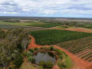 Queensland banana empire selling landmark Bundaberg farm
