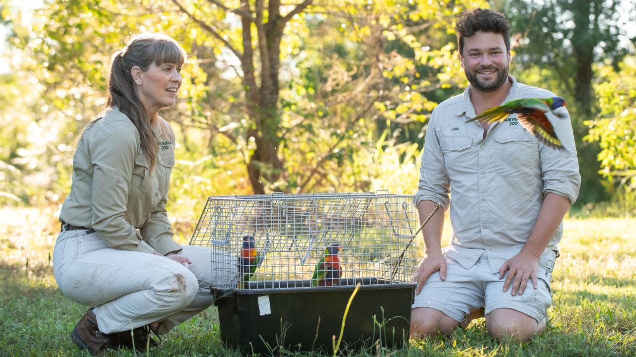 Terri Irwin and an Australia Zoo Wildlife Hospital vet with some of the injured lorikeets.