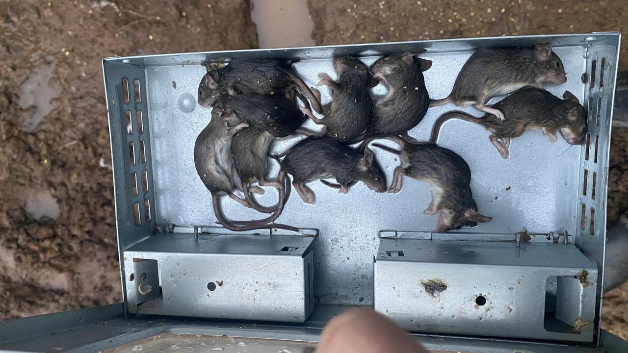 One of the many mouse traps at Erin Anderson's farm in Narrandera, NSW.