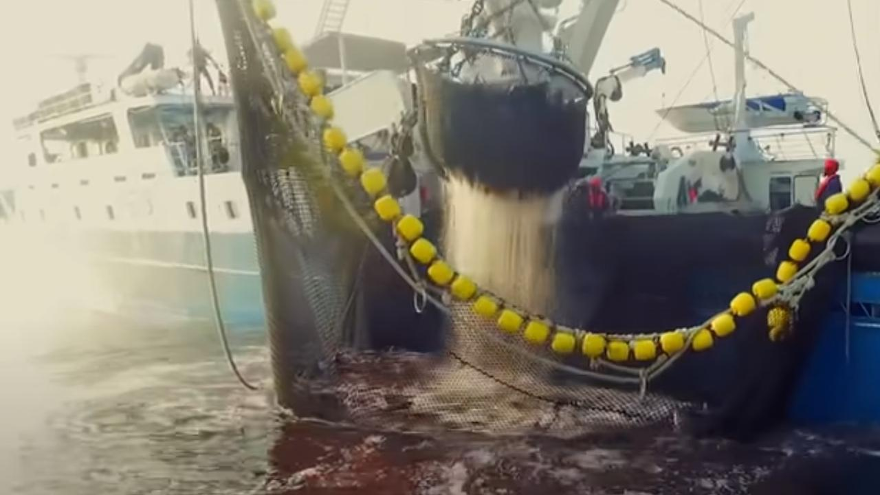Experts say Seaspiracy is overly simplistic and ignores the good practices in the marine industry. Picture: Netflix