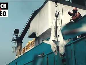 Seaspiracy Netflix doco trailer