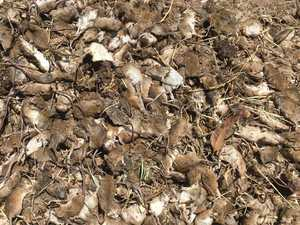 Plague mice take out Telstra services