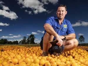 Shock photos of dumped fruit as farmers make $2 a box