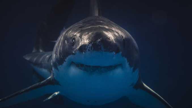 Shark attacks man near popular beach