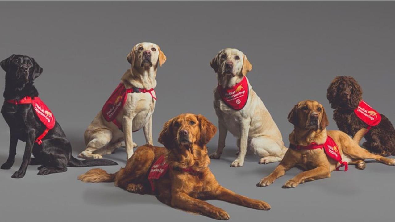 Una foto pubblicata martedì sull'account Instagram di Clarence House con Camilla, duchessa di Cornovaglia, sponsor di Medical Detection Dogs, che elogia le esperienze internazionali di successo.  Foto: Instagram