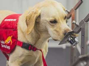 Charles, Camilla hail 'hope' of Covid detection dogs