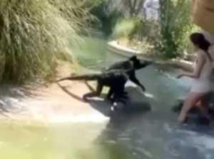 Why 'stupid' tourist broke into zoo enclosure