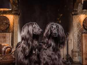 Style icon reveals secrets to a pet-friendly home