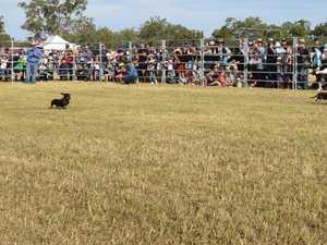 Ridgelands Agricultural Show Sausage Dog Races