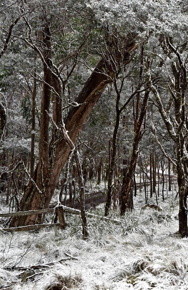 Snow on Mt MacKenzie in 2015. Picture: Neale Maynard