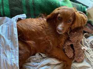 'Horrific': vet issues plea after string of poisonings