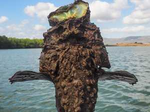 Stonefish victim evacuated from Central Qld island resort