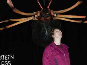 Giant spiders with 3 metre leg spans on show at The Caves