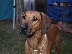 Mackay Kennel Club celebrates 100 years with dog show
