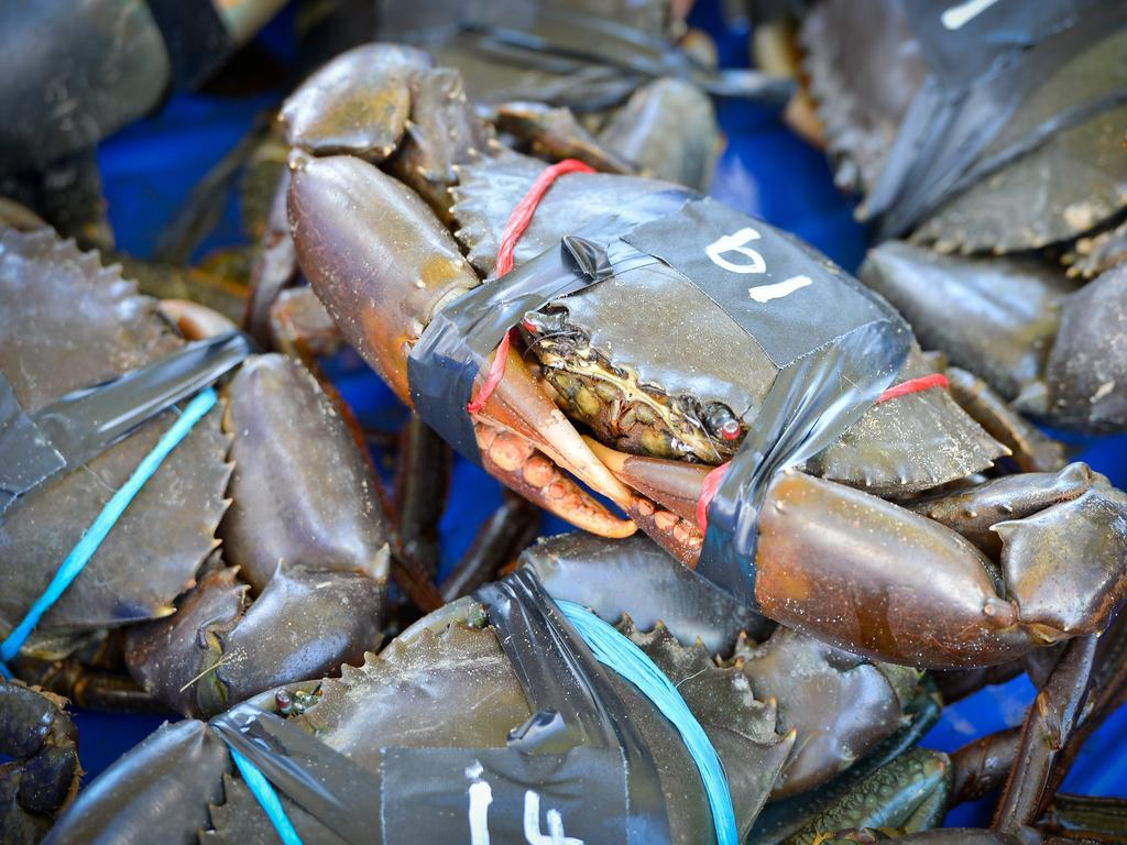 MACA Enterprises in Gladstone will receive up to $25,000 to help export mud crabs to China. Photo: File