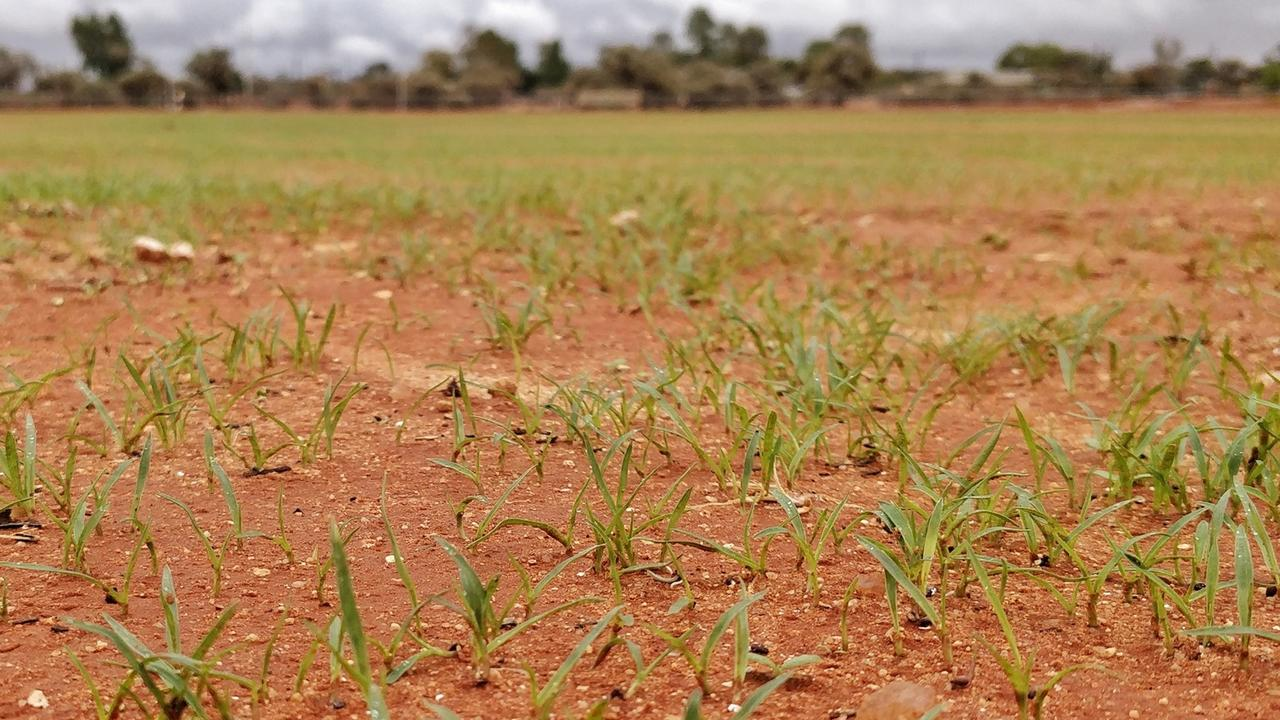 Grass shoots break through the red earth to breath new life into the project. Picture: Supplied
