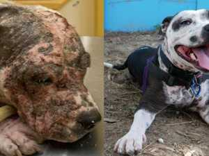 Dog is unrecognisable after appalling neglect