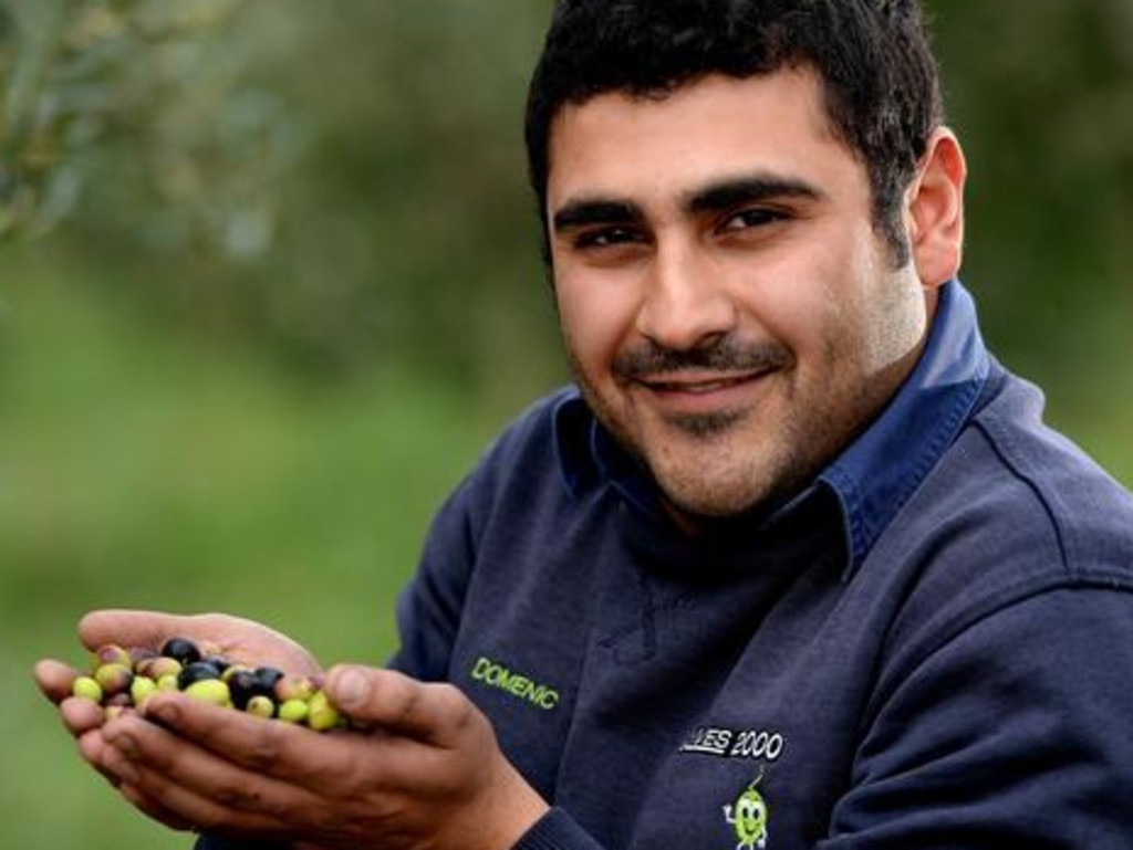 Domenico Catanzariti is an Adelaide olive grower. Picture: Adelaide Advertiser