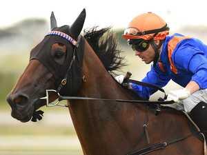 High-profile jockeys line up for Callaghan Park bonanza