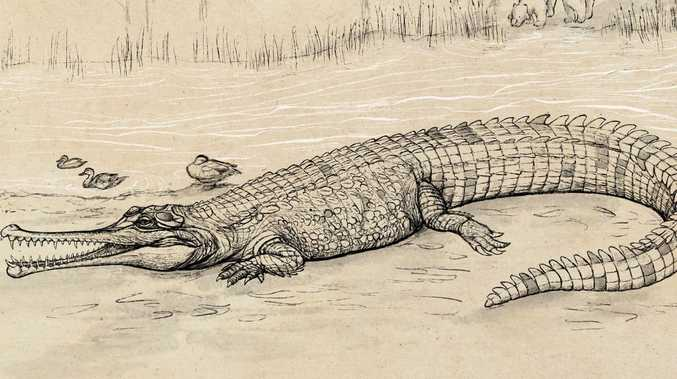 Giant Qld croc once hunted in south east Qld rivers