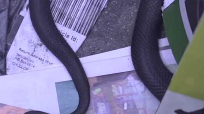 Disturbing find inside wheelie bin