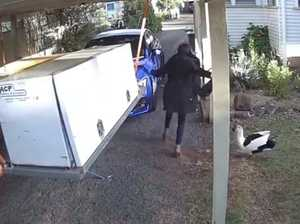 Duck foils robbery attempt in Toowoomba