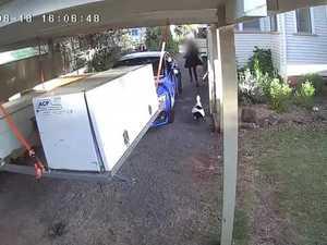 Duck foils trespasser at Toowoomba property