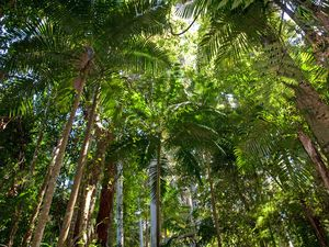 Green group slams forestry over conviction